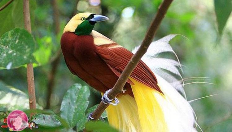 http://www.hislider.com/faq/demos/birds/dataimages/bird-of-paradise-Lophorina-superba.jpg